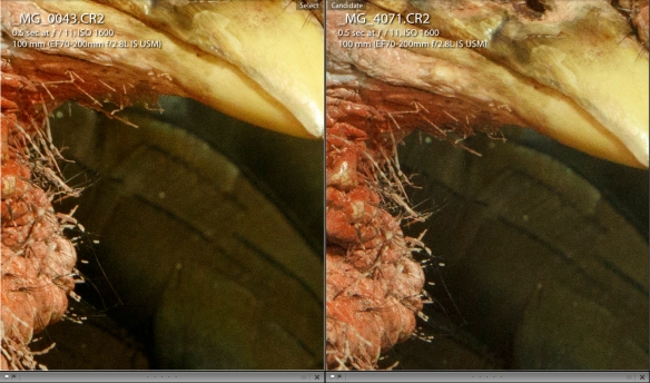 Figure 7. 1:1 view if two test shots taken with the original EOS 7D (right) and EOS 7D Mark II (left) at 1600 ISO.